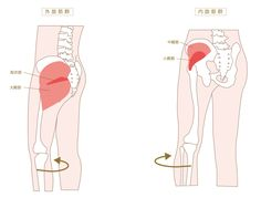 脚が痩せないのは、固まった股関節と偏った筋肉が原因?股関節まわりをゆるめて美脚になる方法|綺麗のトリセツ