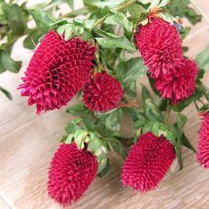 Dekobündel Himbeer Silk, Color, Fake Flowers, Raspberries, Decorating, Red, Dekoration, Colour, Silk Sarees