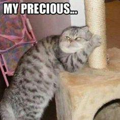 Smeegle kitty