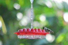 Best Hummingbird Feeder Ever! 24 feeding ports, simple outside filling, no ants, wasps or bees, raised feeding ports prevent rain from running into bowl, heavy duty construction made to last! Purchase your hummingbird feeder from KS Canuck at the Fresno Home & Garden Show, March 4,5,6, 2016 at the Fresno Fairgrounds! www.kscanuck.com www.fresnoshows.com