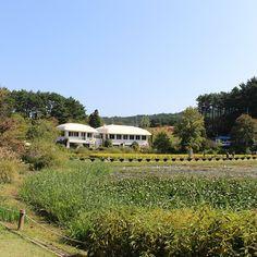 트래블러루앙프라방의 1박2일 서산, 태안 여행 【행복한 여행의 시작, 태안】 익숙한 그곳의 새로운 아름다움에 반하다 中 천리포수목원의 민병갈 기념관 「민병갈(閔丙渴, 1921년 4월 5일 - 2002년 4월 8일)은 한국 최초의 사립수목원을 세운 미국계 귀화 한국인이다. 칼 페리스 밀러(영어: Carl Ferris Miller)가 그의 귀화 전 이름이다.」...