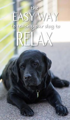 A relaxed dog is a happy dog. Here are some tips to help you