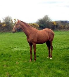 ie horse sales helps horse trainers & breeders buy horses & sell horses online.Thoroughbred buyers & bloodstock agents find Irish horses for sale easily Horse Sales, Horses For Sale, High Class, Big, Animals, Animales, Animaux, Animal, Animais