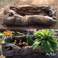 Hollow tree stump ideas planters 17 Ideas for 2019 Log Planter, Garden Planters, Diy Planters, Planting Succulents, Garden Art, Planter Ideas, Succulent Landscaping, Garden Landscaping, Driftwood Planters