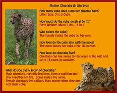 Cheetah Facts For Kids Printable Cheetahs Acinonyx