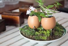 seedlings require attention and a more protected place near my window in the kitchen. Egg shells provide a small space for seedlings until ready to transplant