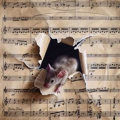 Very grateful that a collector is offering a home to this musical mouse in New Zealand! This is super helpful for my world invasion plans!!! :) Je suis très reconnaissante de savoir qu'une collectionneuse offre un foyer à cette souris musicale en Nouvelle Zélande! Ça m'aide beaucoup pour mon plan d'invasion du monde !!! :)