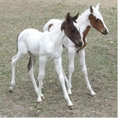 images of horses with twins | Foal Photo Sculptures, Cutouts and Foal Cut Outs