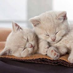 """We quickly discovered that 2 kittens were much more fun than one."" --Alan Lacy"