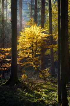 Golden tree by Martin