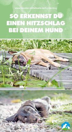 So erkennst Du einen Hitzschlag bei Deinem Hund - jetzt im Haustier Notfallkarte Hunde Blog! #haustiernotfallkarte #hunde #blog