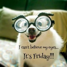 I can't believe my eyes.It's Friday! 😀🤗 Cute Puppy in glasses. Happy Friday Quotes, Friday Meme, Friday Sayings, Friday Yay, Finally Friday, Monday Quotes, Funny Inspirational Quotes, Funny Quotes, Funny Memes