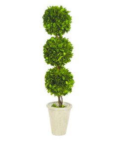 Another great find on #zulily! Triple Ball Preserved Boxwood Topiary #zulilyfinds