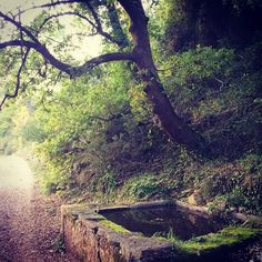 #Safareig a peu del camí #Gelida #Penedes