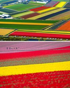 Where to travel in spring? One of the most beautiful places in the world is the Netherlands tulip fields in spring. Colorful blooming tulips become your brig. Places To Travel, Places To See, Travel Destinations, Places Around The World, Around The Worlds, Beautiful World, Beautiful Places, Beautiful Pictures, Tulip Fields