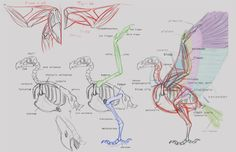 """Concept Design Academy: """"Animal Anatomy"""" with Jonathan Kuo~!! ✤ 