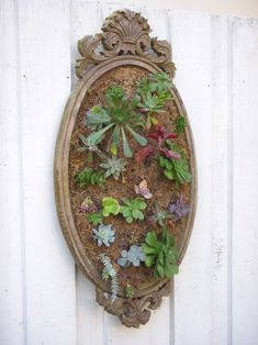 """beautiful old mirror - stapled chicken wire to the back of the frame, then placed a layer of moss, followed by a layer of cactus potting soil, topped with another layer of moss, and finally finished with a top layer of wire.  After watering the """"canvas"""" took a wooden chop stick and made small holes and popped in each succulent."""