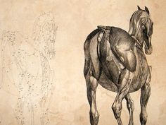 george-stubbs-anatomy-of-the-horse-1766-lg-folio-etching.-1st-edition-13-[2]-19241-p.jpg (1050×788)