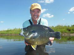 Big Bluegill | Big Hybrid Bluegill from Herman Brothers Pond Management - Bluegill ...