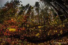Changing Perspectives Changing Colors by SrihariYamanoor