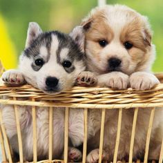 I love cute cats and kittens 'cuz they bring me happiness. Kittens And Puppies, Cute Puppies, Cats And Kittens, Cute Puppy Wallpaper, Dog Wallpaper, Mobile Wallpaper, Pet Shop, Dog Photography, Dog Behavior