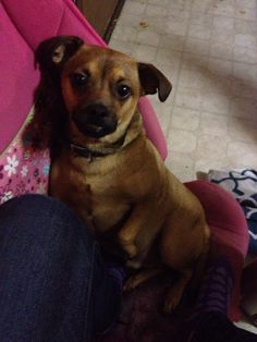 Sparky, a chihuahua-terrier mix who went missing after a house fire at his New York home, has been found safe!