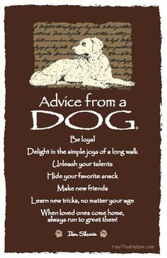 Advice from our dog