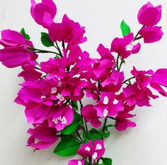 Paper Flower Bougainvillea