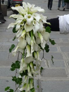 Lys Calla, Calla Lillies, Calla Lily, Wedding Bouquets, Wedding Flowers, Wedding Day, White Bouquets, Wedding Stuff, Tropical Centerpieces