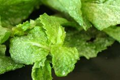 Learn how to make your own candied mint leaves for garnishing holiday desserts and cocktails on HGTV.