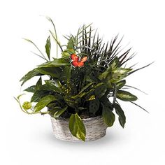 Basket Garden is just one of the many funeral floral arrangements available on Frazer Consultants' Tribute Store, an online flower store available on all Frazer-powered funeral home websites.