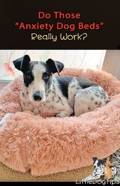 Do those fuzzy, donut shaped dog anxiety beds actually help relieve anxiety, or are they just a bunch of fluff? Diy Pet, Diy Dog Bed, Baby Animals, Cute Animals, Very Small Dogs, Reactive Dog, Dog Gadgets, Dog Stroller, Dog Anxiety
