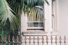 Window 2, Sydney (by schorlemädchen)