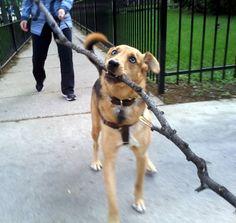 Vita Bone Summer Dog Photo Contest