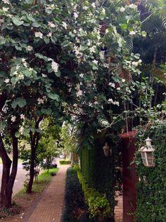 Vereda con flores. Asunción