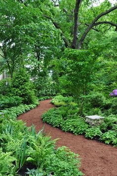 Private Garden, Forest Hill, ON. This looks like a woodland park, but is actually a suburban garden in downtown Toronto.: