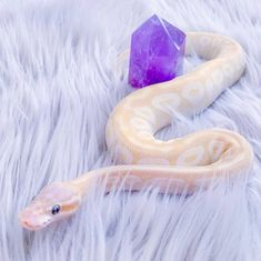 Pretty Snakes, Cool Snakes, Colorful Snakes, Beautiful Snakes, Cute Reptiles, Reptiles And Amphibians, Snake Breeds, Calming Pictures, Terrarium Reptile