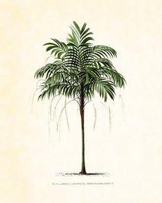 Antique French Palm Tree Plate 2 Botanical 1878 8 x 10 Art Print Wall Decor. $10.00, via Etsy.