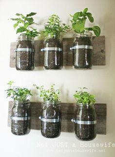 Indoor small container herb garden