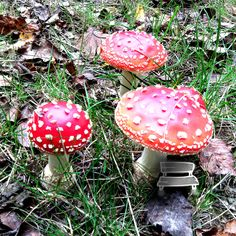 Abri de champignons clandestins