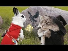Stop What You're Doing And Watch This Epic Bunny Video, Right Now!