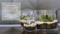 Succulent Terrarium - looks neat and pretty easy.   From Letters From Lala blog.