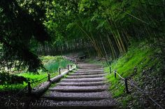 Bamboo Path  8 x 12 Photographic Print by AramsEyes on Etsy