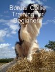 Border Collie Training for Beginners