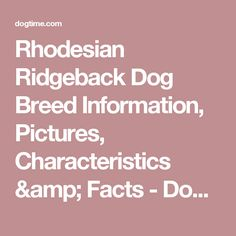 Rhodesian Ridgeback Dog Breed Information, Pictures, Characteristics & Facts - Dogtime