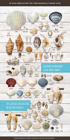Own a business by the beach? Planning an event by the beach?) Need some inspiring seashells visuals for your