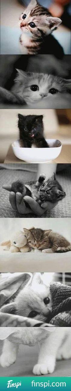 kotecki #koty
