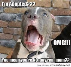 Dog Funny Pictures Quotes Photos Images Pics thumb