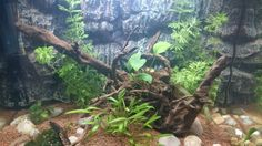 Biotope amazonien Aquariums, Fish Tanks, Freshwater Aquarium, Tanked Aquariums