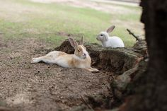 Okunoshima, Rabbit Island, Japan